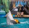 Дельфинарии, океанариумы в Деденево