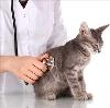 Ветеринарные клиники в Деденево